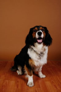 hardwood flooring that is best for dogs