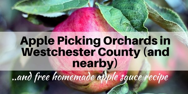 Apple Picking Orchards in Westchester County NY