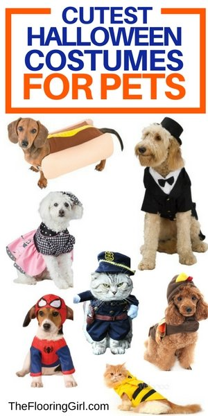 Cutest halloween costumes for pets - dogs and cats