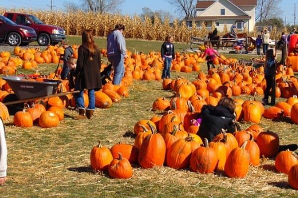Westchester NY pumpkin patches - Stuart's Fruit Farm