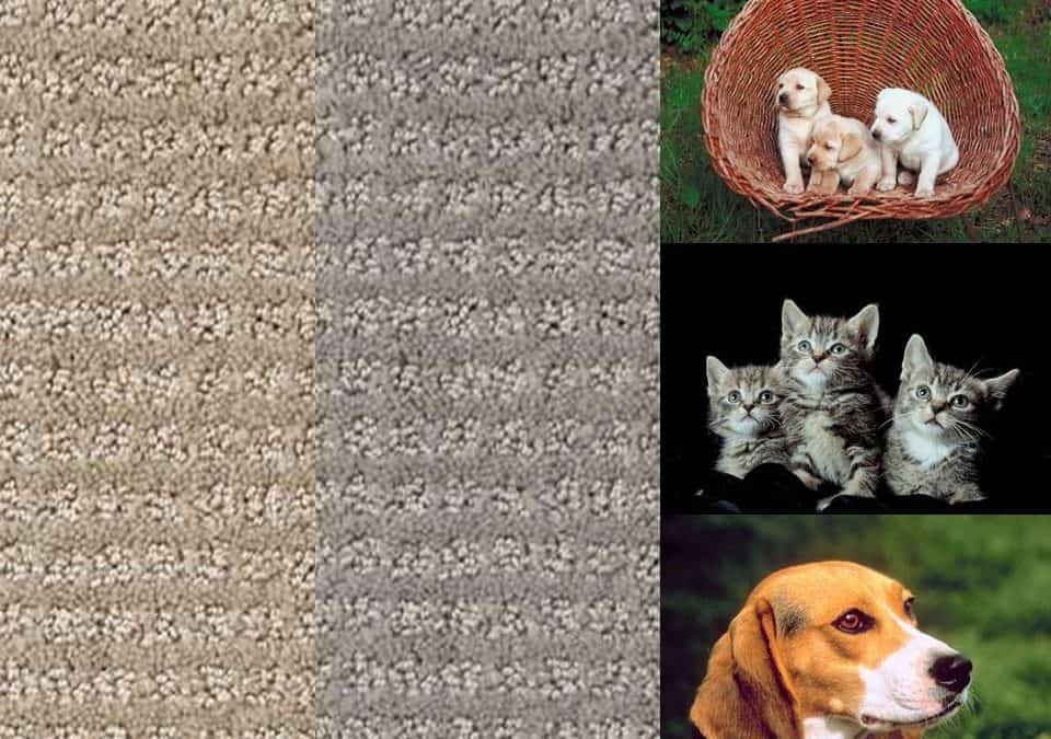 What is the best carpet for pets? Stainmaster® PetProtect® | Great for dogs and cats