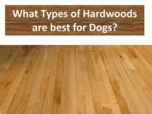 Types Of Hardwood Flooring For Dogs