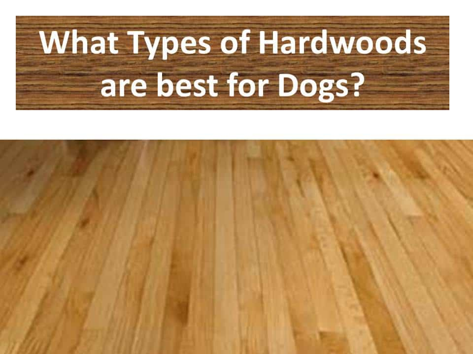 Types of hardwood flooring for dogs the flooring girl for Hardwood floors good for dogs
