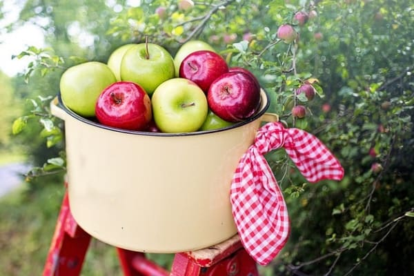 best apple picking orchards - Outhouse Orchards in Westchester