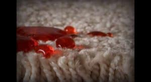 Shaw stain resistant carpet